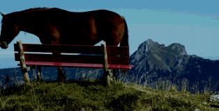 Horsemeat powering Full Tilt?