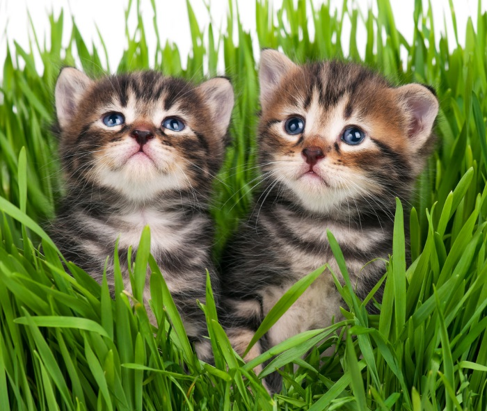 Here are some cute kittens
